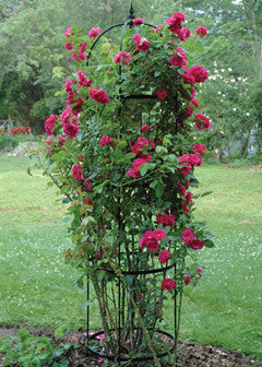 Rose Pillar Steel Obelisk (4 Sizes Available) - Henderson Garden Supply