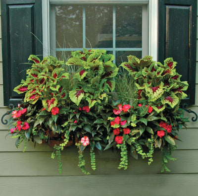 Pamela Crawford Window Box Replacement Liners for Side Planting - Henderson Garden Supply