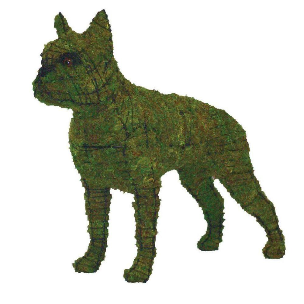 Boston Terrier Topiary frame filled with lush Sphagnum Moss - Henderson Garden Supply