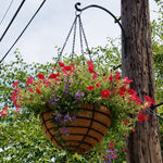 "Old Fashioned Hanging Basket 20"" Set of 5 - Henderson Garden Supply"