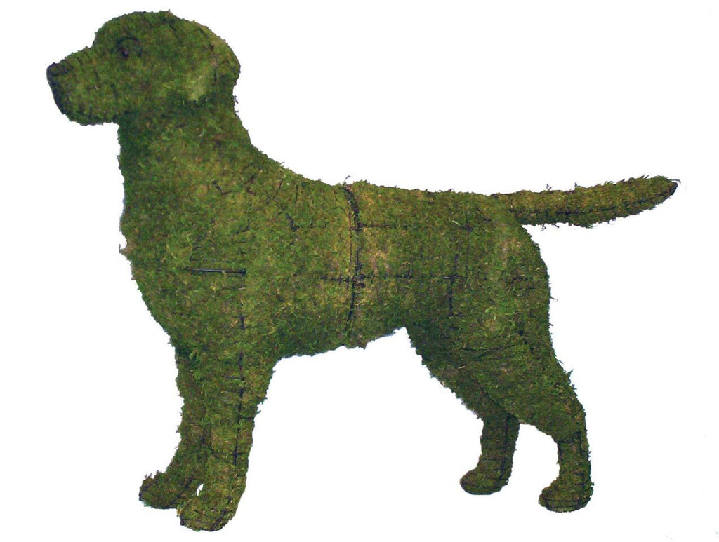 Labrador Retriever steel topiary frame filled with green dyed sphagnum moss - Henderson Garden Supply