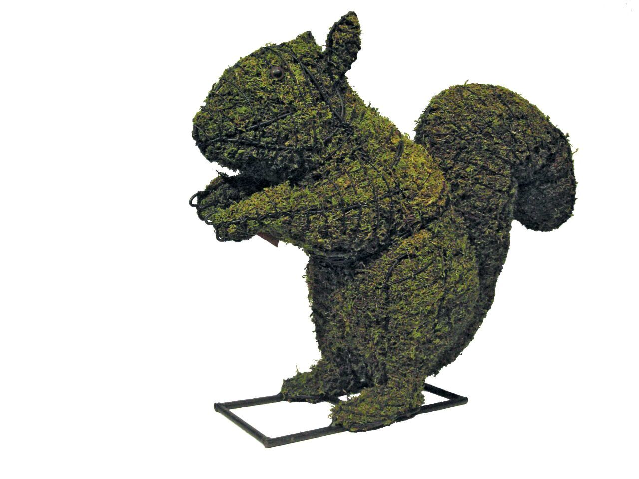 Squirrel steel topiary frame filled with green dyed sphagnum moss - Henderson Garden Supply