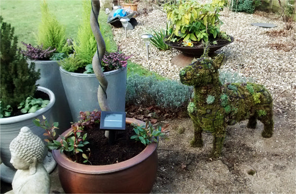 Bull Terrier topiary frame shown planted with succulents - Henderson Garden Supply
