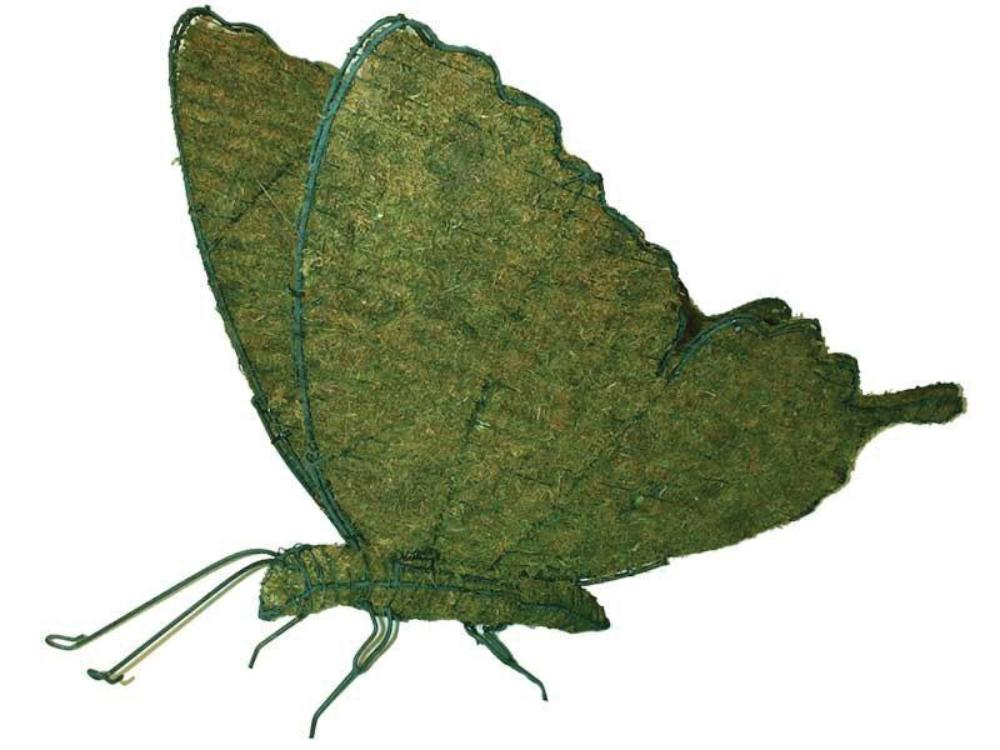 Butterfly steel topiary frame filled with green dyed sphagnum moss - Henderson Garden Supply