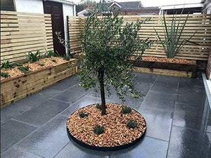 Everedge Black Powder Coated Steel Tree Rings - Henderson Garden Supply