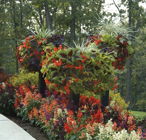 Border Column Kits Show with Red blooming flowers - Henderson Supply