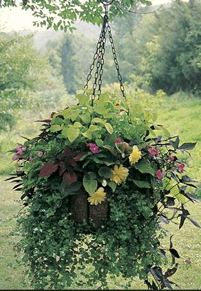 "Heavy duty 25"" hanging basket and coco fiber liner - Henderson Garden Supply"