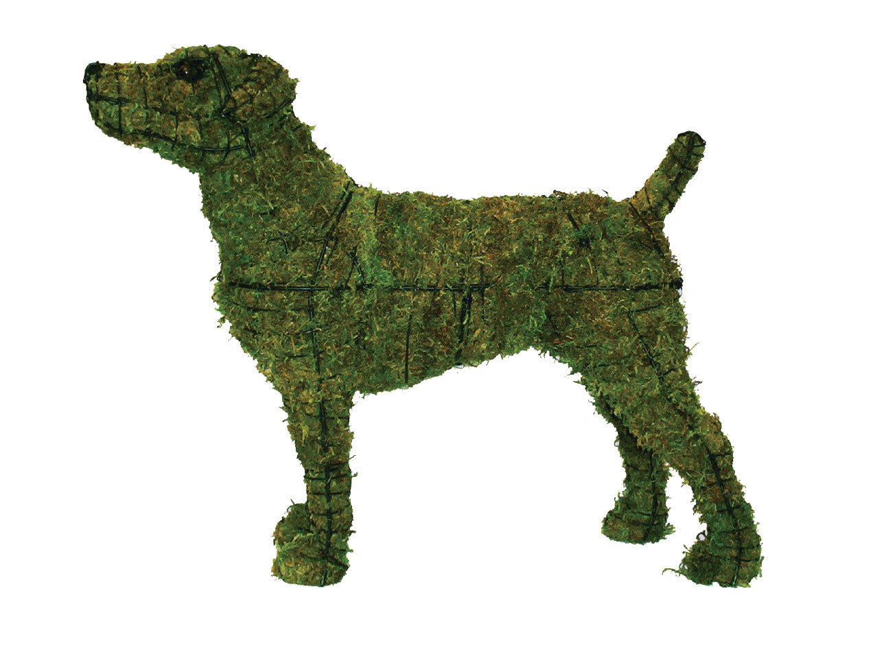 Jack Russell steel topiary frame filled with green dyed sphagnum moss - Henderson Garden Supply