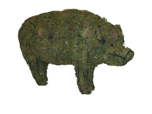 Pig steel topiary frame filled with green dyed sphagnum moss - Henderson Garden Supply
