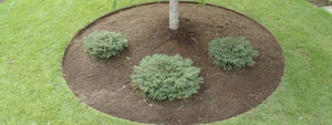 Sure-Edge Commercial Steel Edging - Henderson Garden Supply