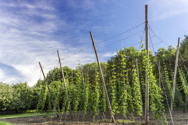 View Hops Trellis Products Online Orchard Valley Supply