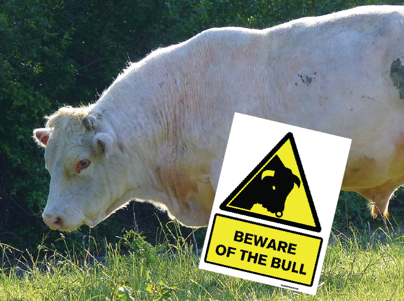 5 x Beware of the Bull Signs (400x300mm) 16in x 12in for €50
