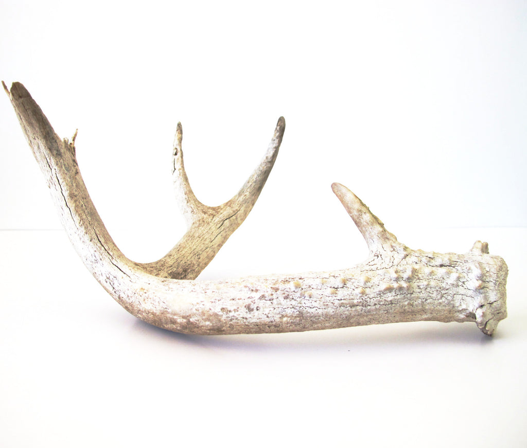 Assorted Antlers