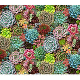 Succulent Charm - Elizabeth's Studio Cotton Fabric
