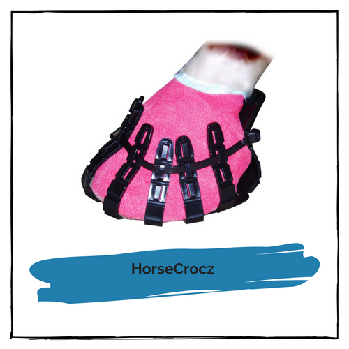 HorseCrocz (Small)
