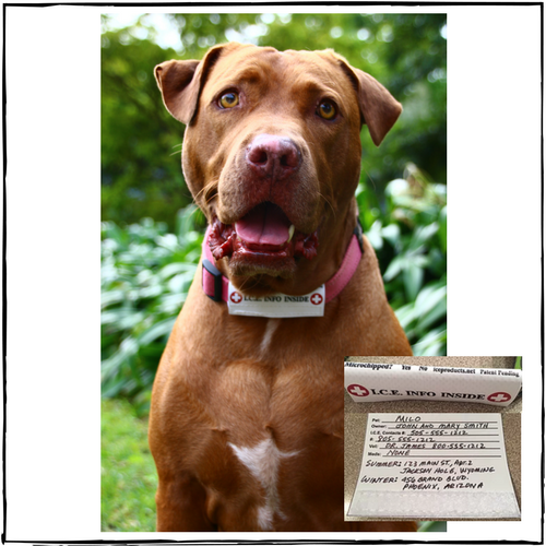 I.C.E. Collar ID For Dogs