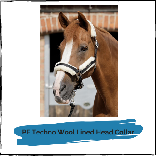 PE Techno Wool Lined Head Collar