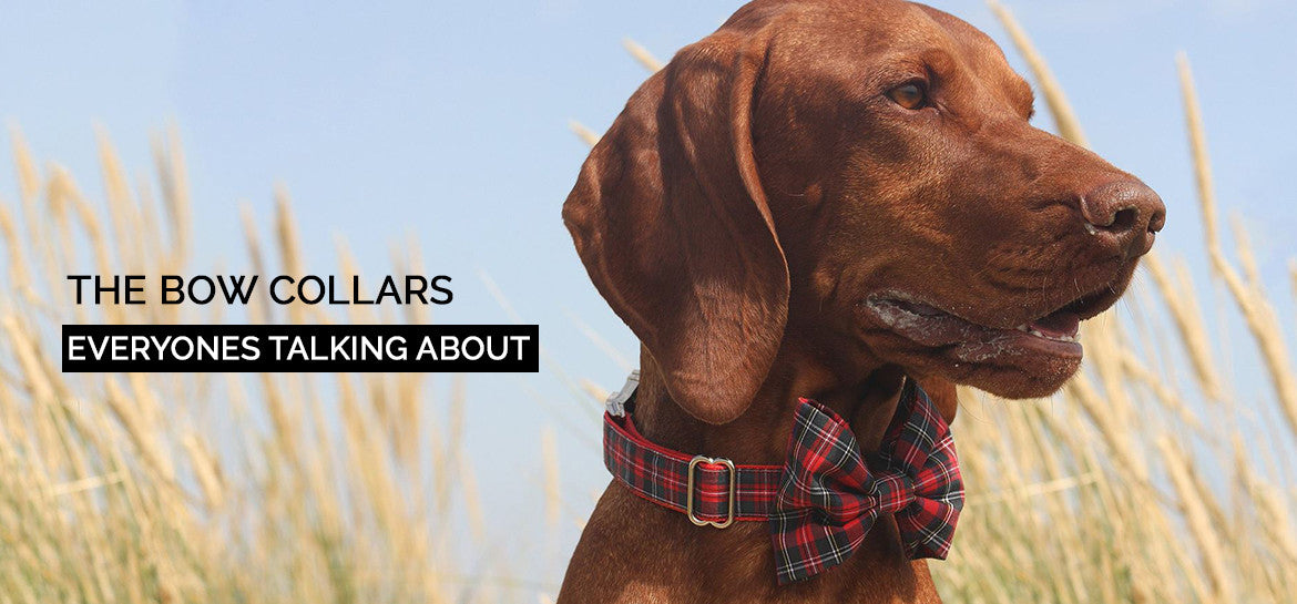 Dog Bow Ties everyones talking about