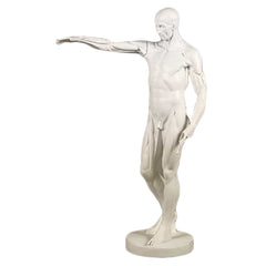 XoticBrands Anatomy Of Man - Drawing Casts   Anatomies