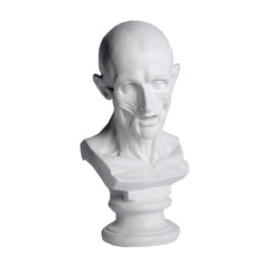 Anatomy Bust -  Other Busts Busts