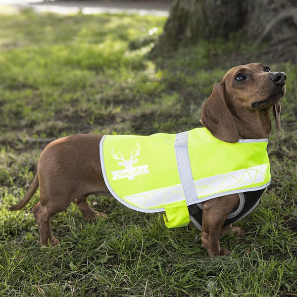 cool hi viz dog coat