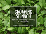 Growing & Caring for Spinach