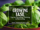 Growing & Caring for Basil
