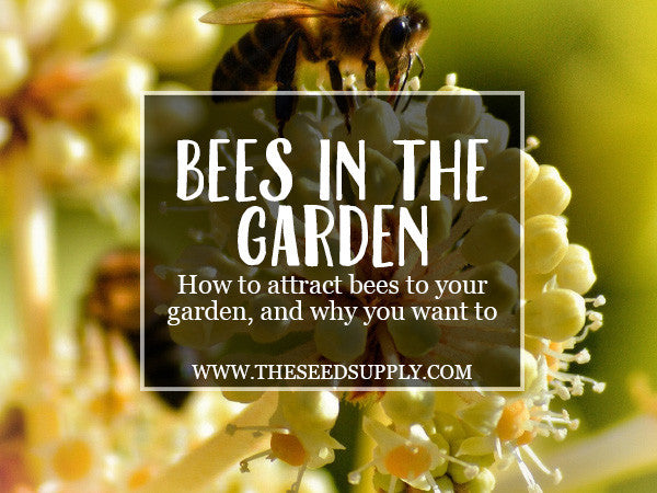 Bees in the Garden – how to attract bees to your home garden, and why you want to