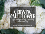 Growing & Caring for Cauliflower