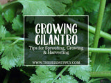 Growing & Caring for Cilantro