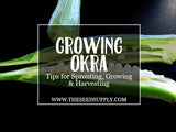 Growing & Caring for Okra