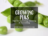 Growing & Caring for Peas