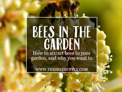 bees in the garden - the seed supply