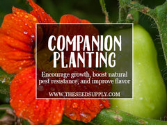 companion planting - the seed supply