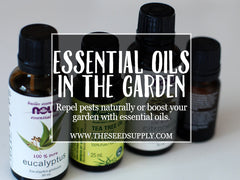gardening with essential oils - the seed supply