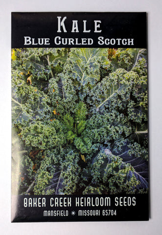 Blue Curled Scotch Kale Seed, 250ct