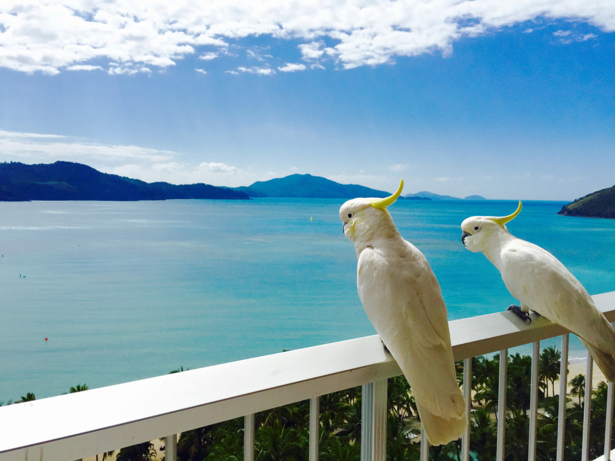 Finding a Bird-Friendly Hotel