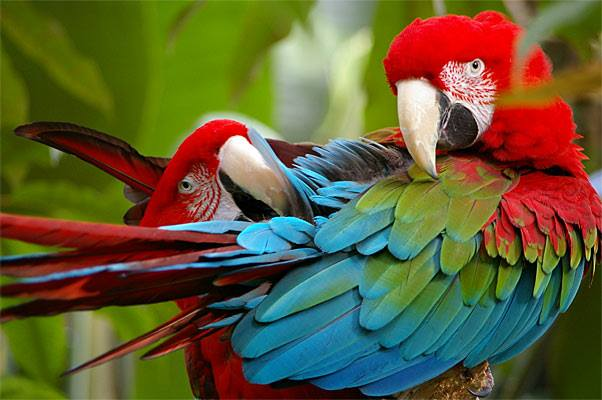 Parrot Plucking Series: The Link Between Hormones and Parrot Plucking