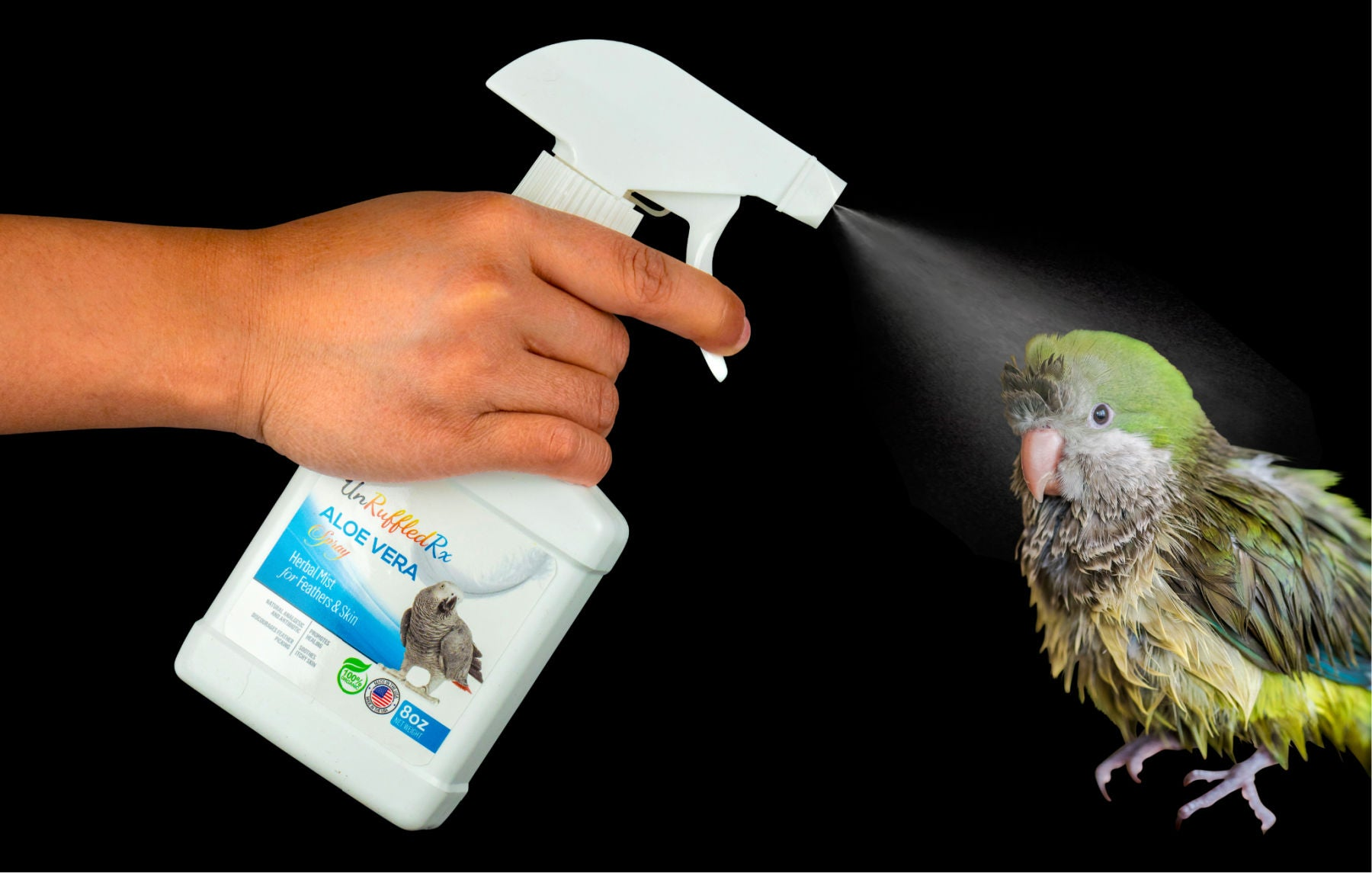 how to mist a bird