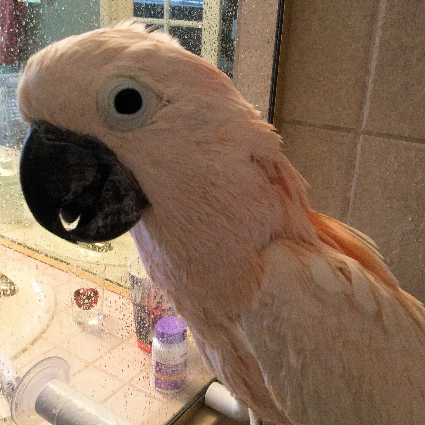 How To Give A Parrot A Bath