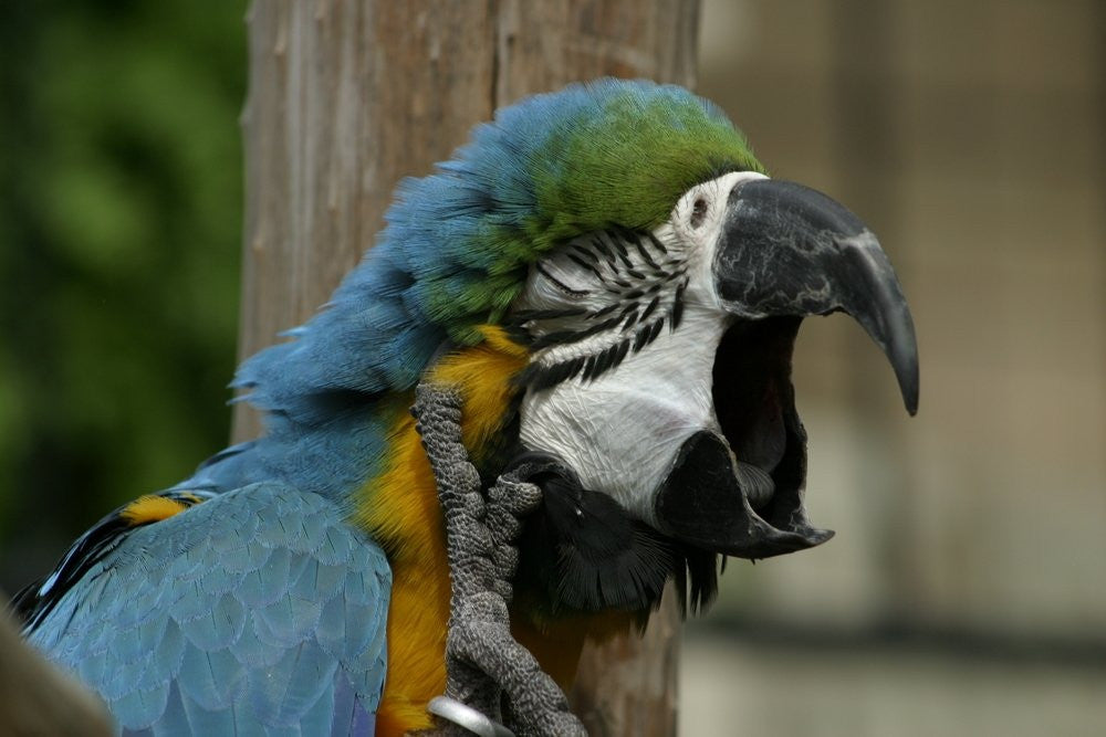4 Main Causes of Parrot Breathing Problems