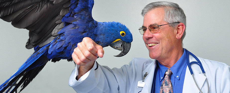 Hormonal Parrots: Part 5 Clinical Presentation at the Vet