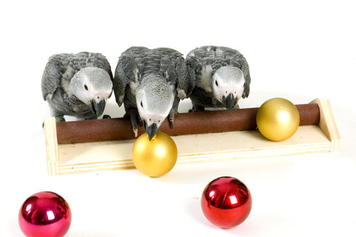 Stress-free holiday tips for birds