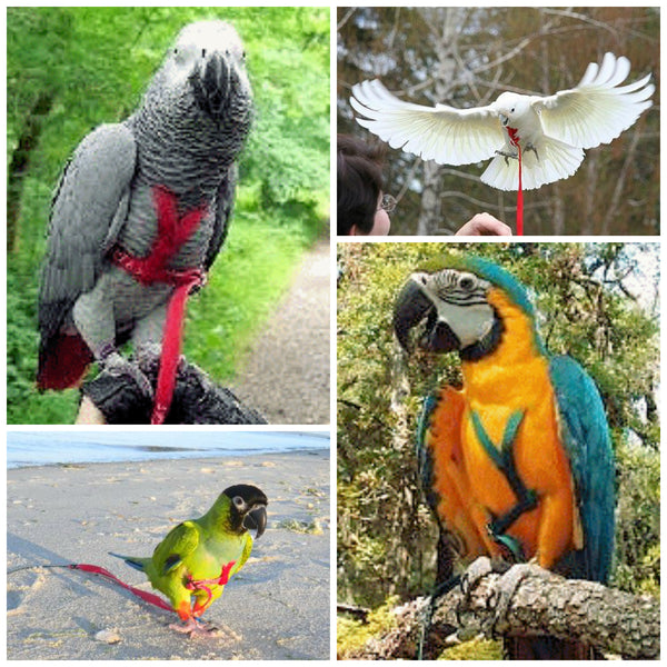 Parrots Need Environmental Enrichment