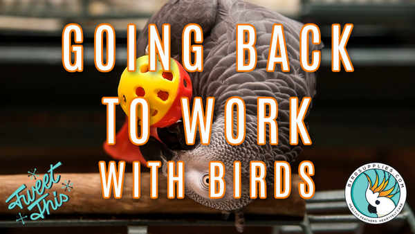 Bird Care For When You Go Back To Work Post-COVID