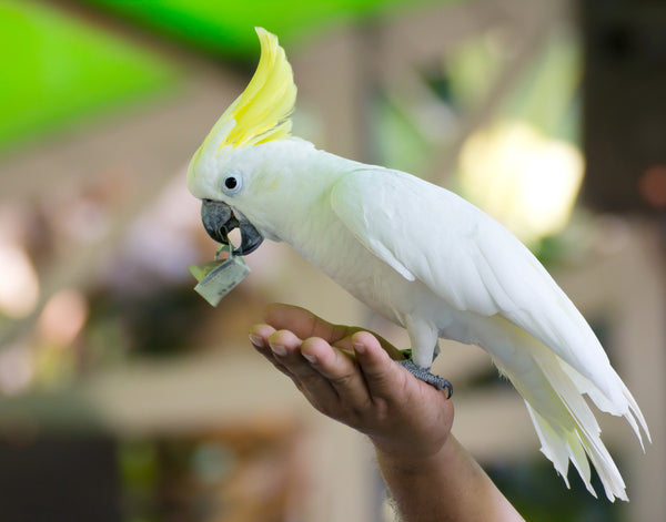 Costs of owning a parrot