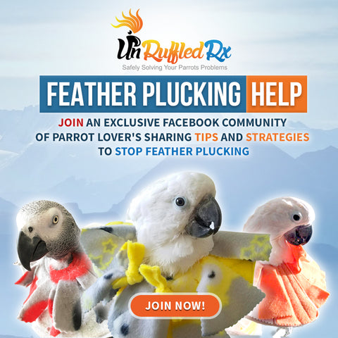 Join Facebook Group for Feather Plucking Parrots