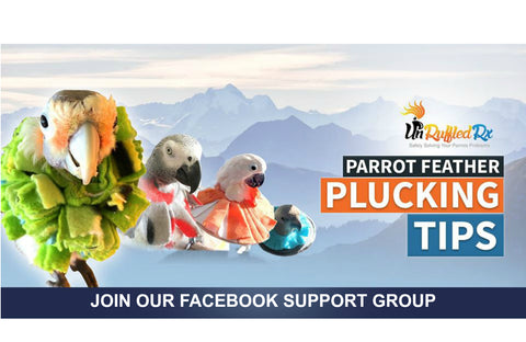 Feather Plucking Support Group