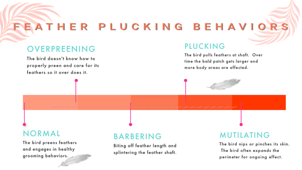 feather plucking in birds