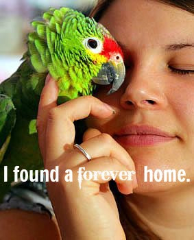 Parrot Rescue Resources